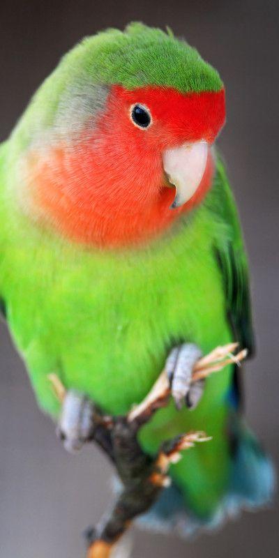 Love Bird looks like mine <3
