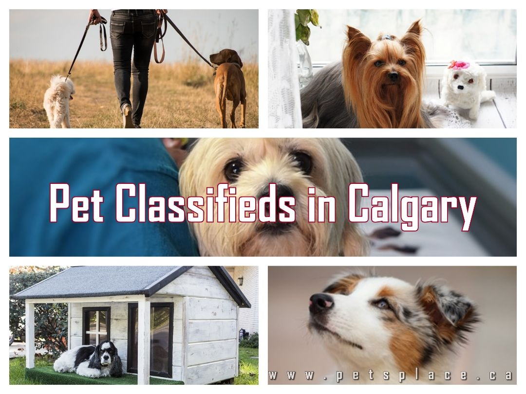 Petsplace Is A Better Way To Search Pet Classifieds In Calgary In 2020 Service Animal Find Pets Pet Businesses