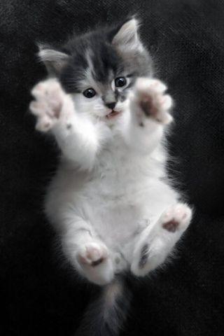 kittenss
