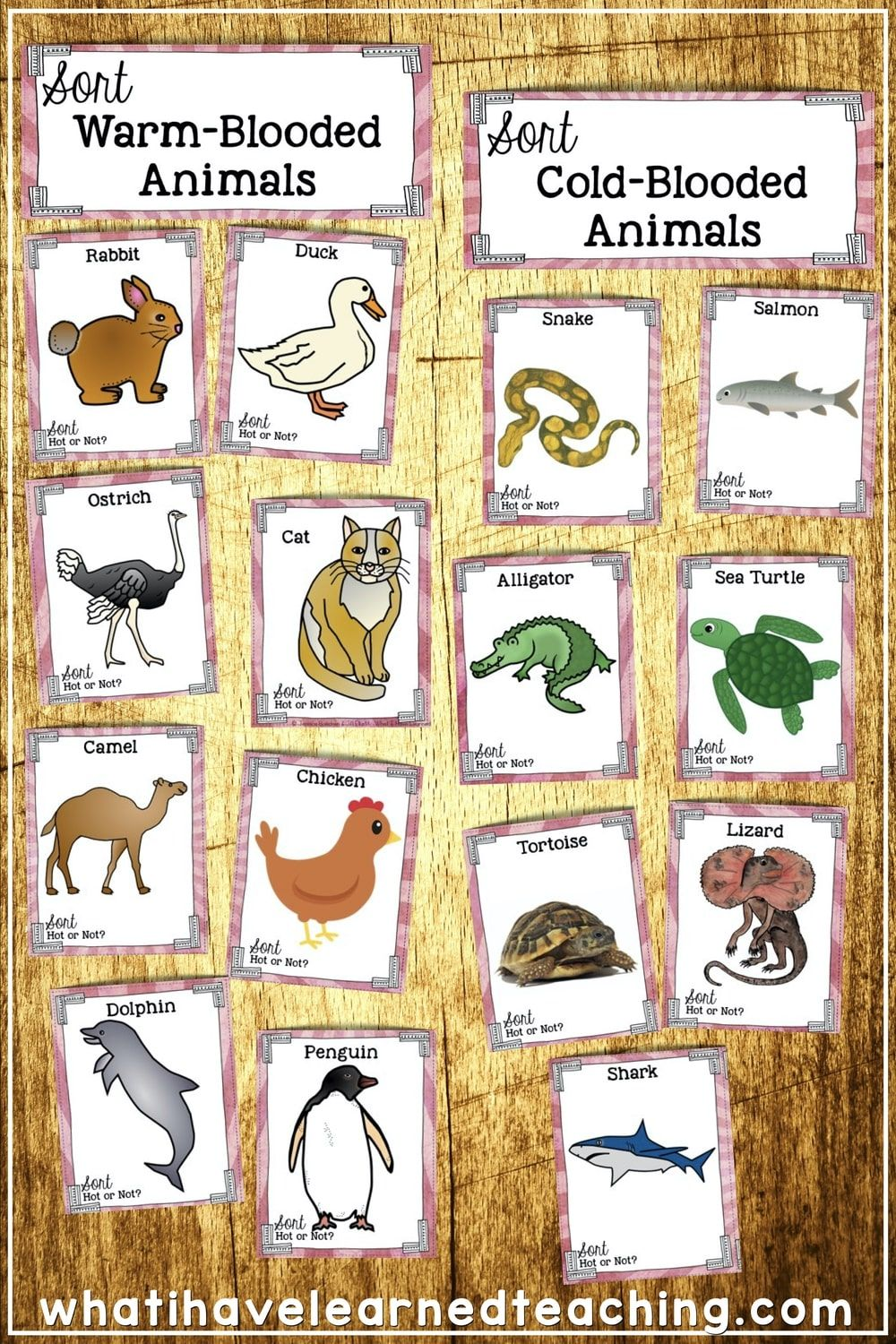 Warm-Blooded Vs. Cold-Blooded Animals Science Sort in 2020 | Third grade  science, Third grade science centers, Teaching third grade
