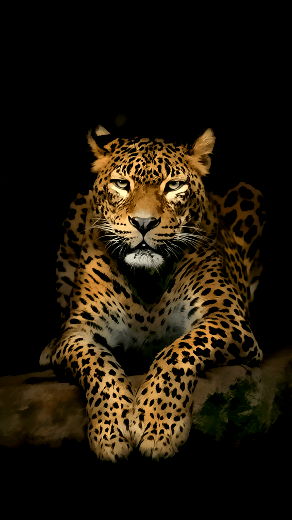 Wallpaper 4k Hd For Mobile Gallery Jaguar Animal Wild Animal Wallpaper Animals