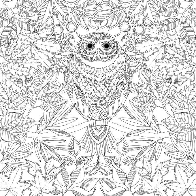 - Secret Garden Johanna Basford Owl Coloring Pages, Basford Coloring  Book, Coloring Books