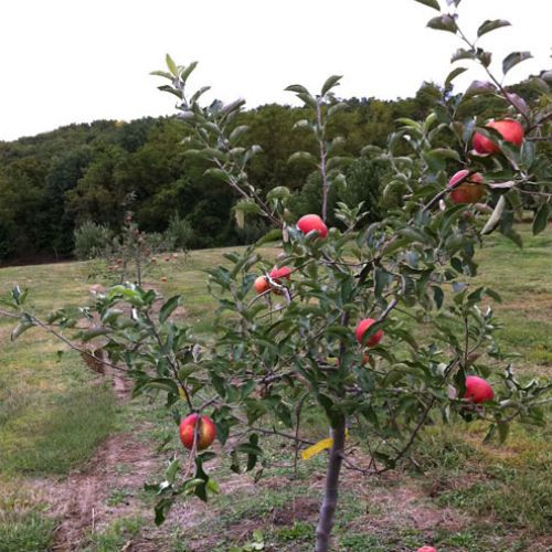 Dwarf Fruit Tree Assortment From Stark Bro S Dwarf Fruit Trees Fruit Trees In Containers Fruit Garden