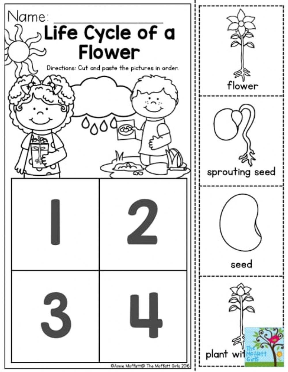 Plant Life Cycle Worksheet Life Cycle Of Plant Interactive ...