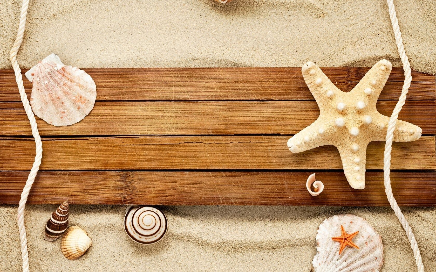 Sand Shells Snails Starfish Beach HD Wallpaper WallpapersHd Wallpaper3d Animation