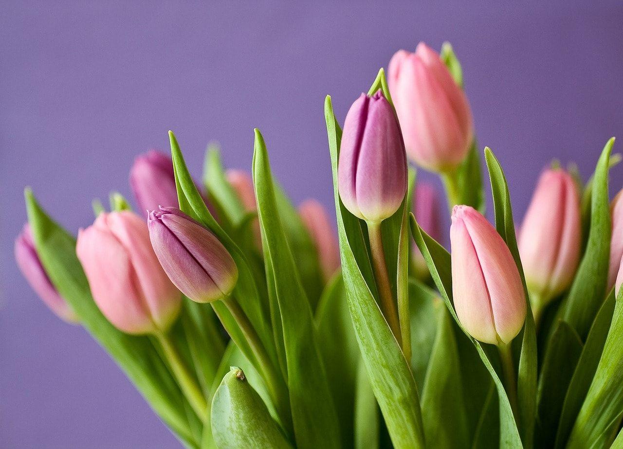 Piantare I Bulbi Di Tulipani bulbi di tulipano: tutti i segreti per prendersene cura (con