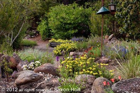 Kyte Backyard California Native Plant Garden By Saxon Holt. Backyard Garden  Design, Backyard Plants