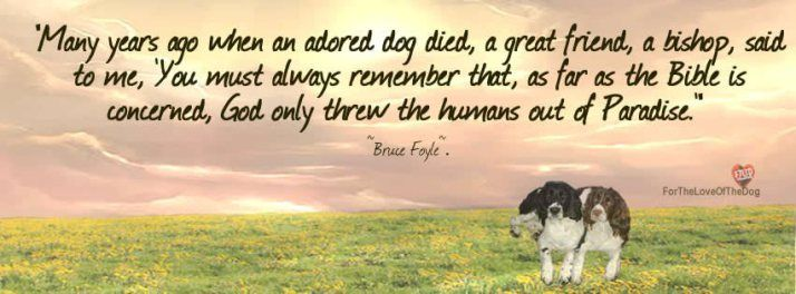 Only Man Was Evil Dogs Dog Died All Dogs