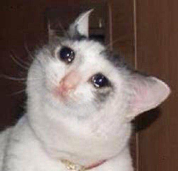 Resultado de imagem para meme gato chorando