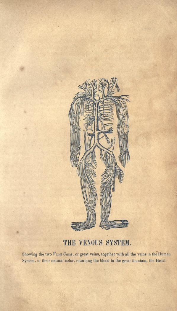 A treatise on anatomy, physiology, and health : - Biodiversity Heritage Library