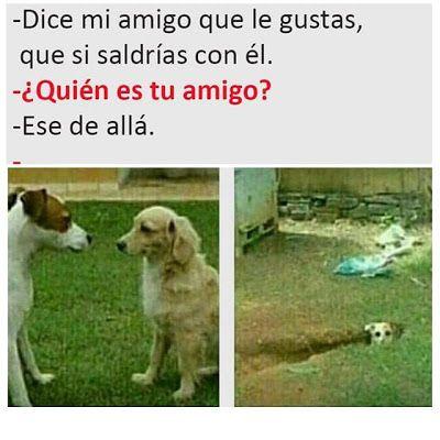 Obvio! Fotosparafacebook.es Memes divertidos, Meme