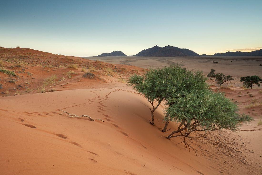 Tag 4 Namib Naukluft Nationalpark Namibia Roadtrip