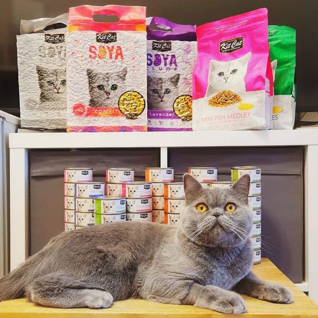 Mommy And Daddy Went Crazy On Kitcat Official Food And Litter But They Know How Much I Like It Cats Cat Food Cat Life