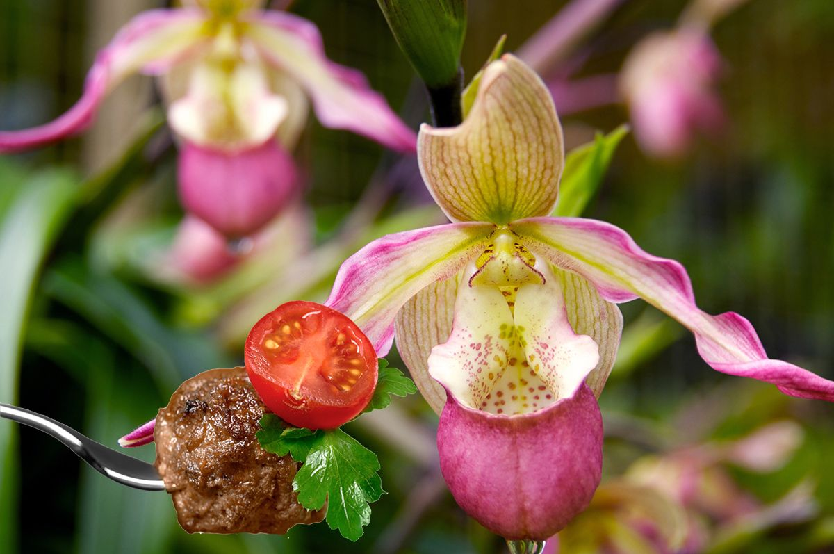 Orchids need food just like people do plants