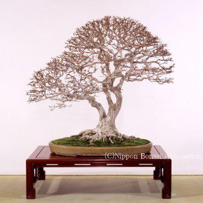 I Really Love The Look Of Bonsai Trees Please Check Out My Website Thanks Www Photopix Co Nz Bonsai Art Bonsai Tree Bonsai Plants