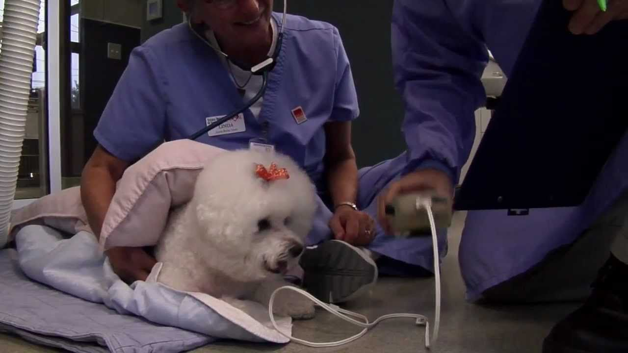 15+ Animal hospital of north asheville images
