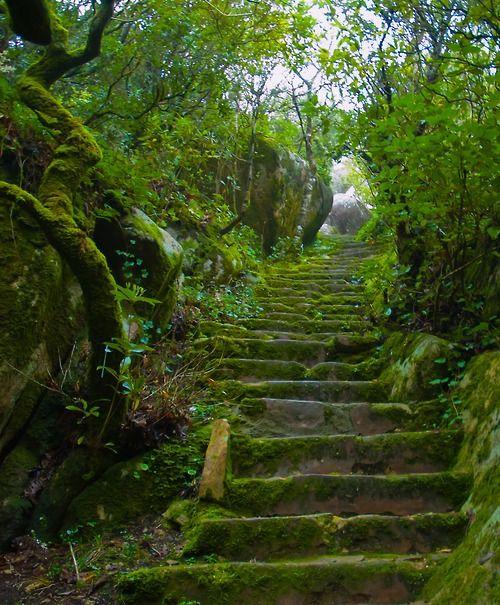 Green Stairs In Pal 225 Cio Da Pena Park Sintra