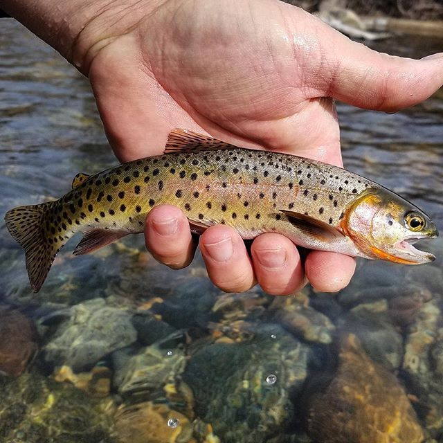 Guided Fly Fishing Trips In Colorado Fly Fishing Fish Fishing Trip