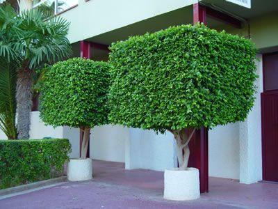 Tipos de poda para un rbol fertilizantes y algo mas for Arboles ornamentales jardin