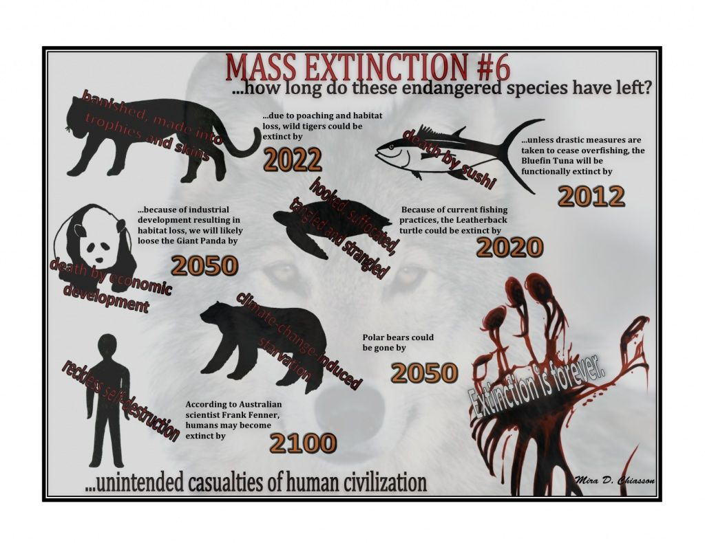Extinction Endangered Species Endangered Endangered Animals