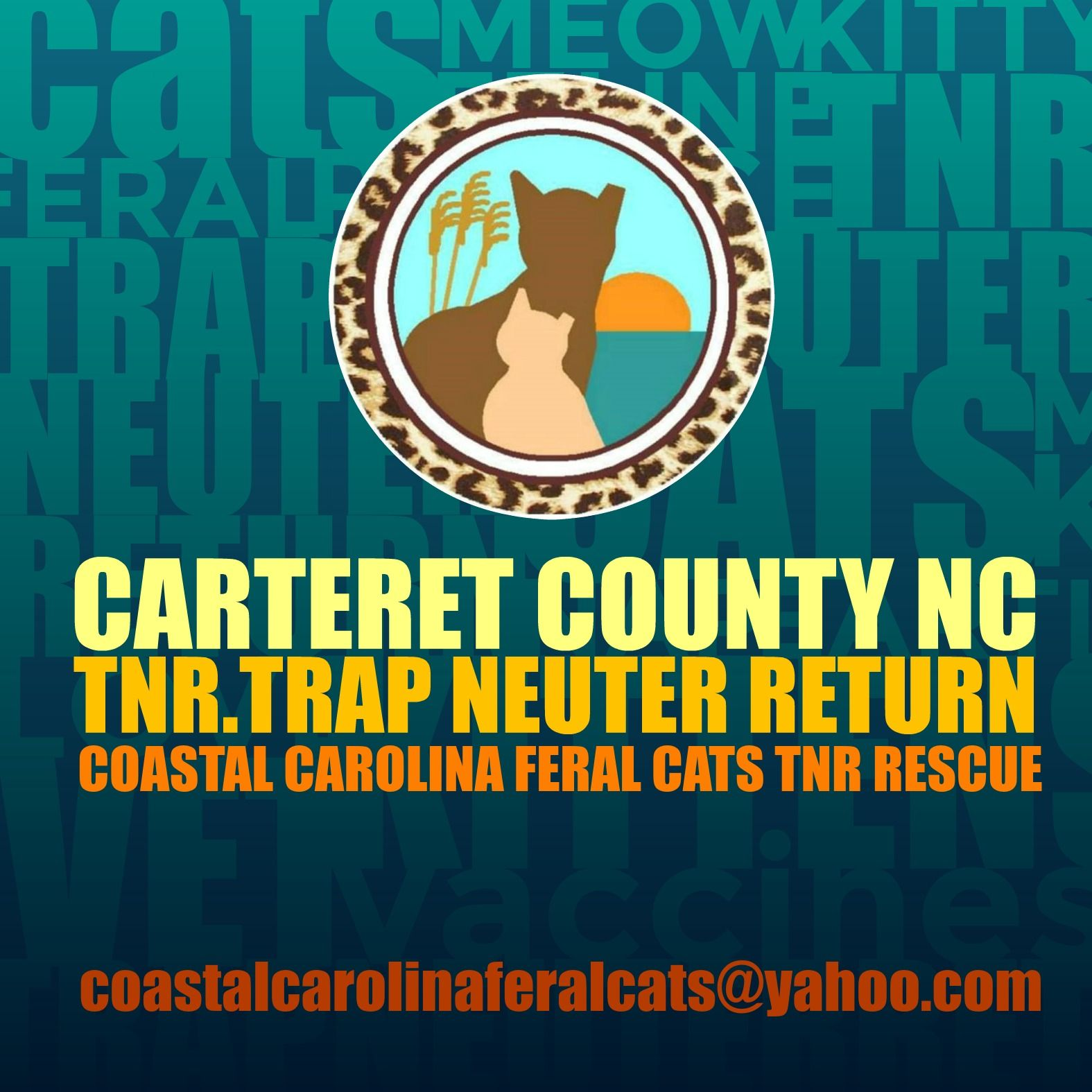 Pin by coastal carolina feral cats t on ccfc ads in 2020