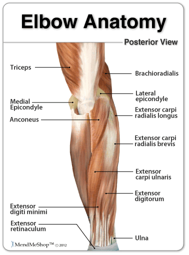Anatomy of the Elbow - Lateral and Medial Epicondyle Location ...