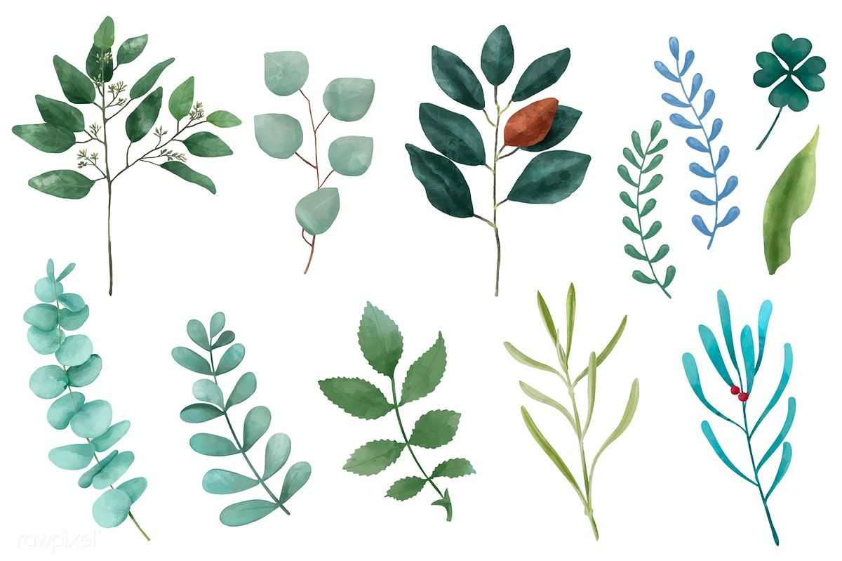 Free Different Types Of Illustrated Plant Leaves Isolated On