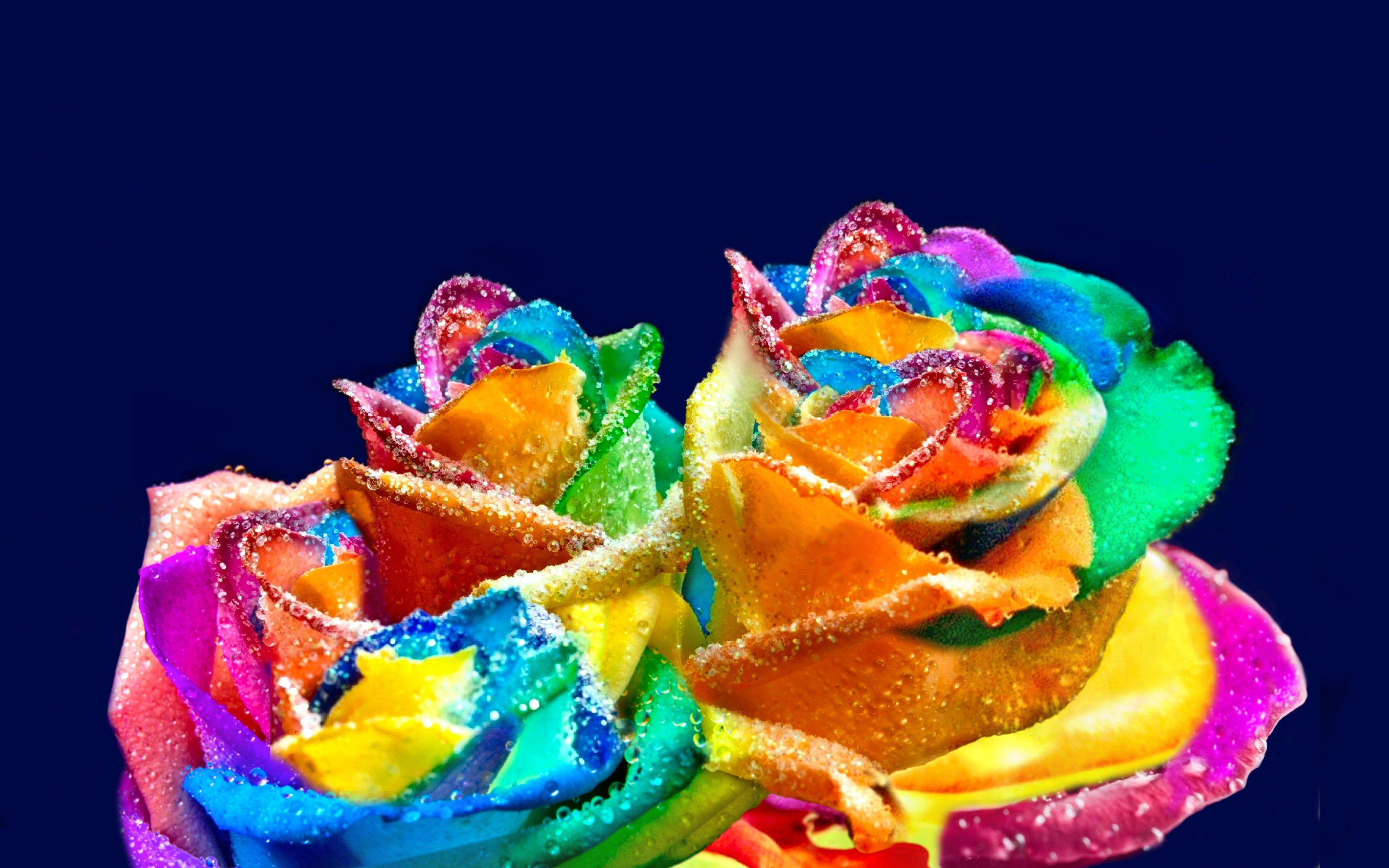 Terra/Natureza Rose  Opus Colorful Drops Nature Highres Papel de Parede