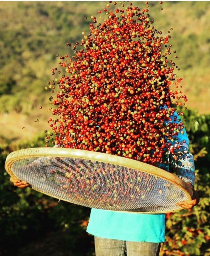 12+ Where did coffee beans come from inspirations
