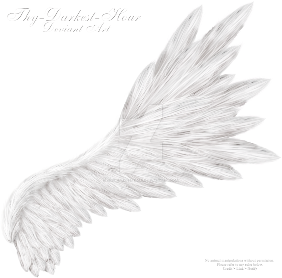 Flared Wing White By Thy Darkest Hour On Deviantart Wings Wings Drawing Wings Art