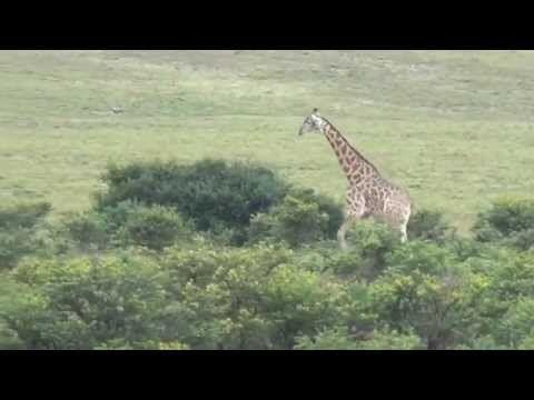 Safari @Pumba Private Game Reserve & Spa. Musiche registrate grazie all' Associazione no profit Uthando www.uthandosa.org