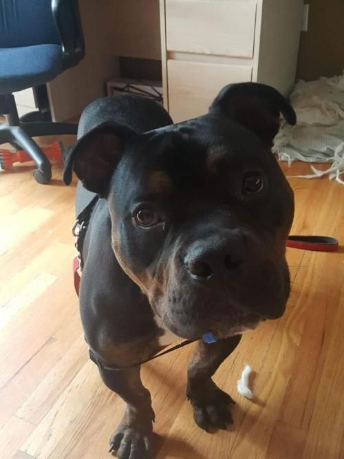 Adopt Rocky On Adopte Me Please Dogs Animals Animal Rescue