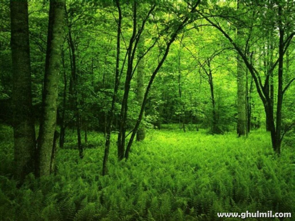 Beautiful Natural Green Forest