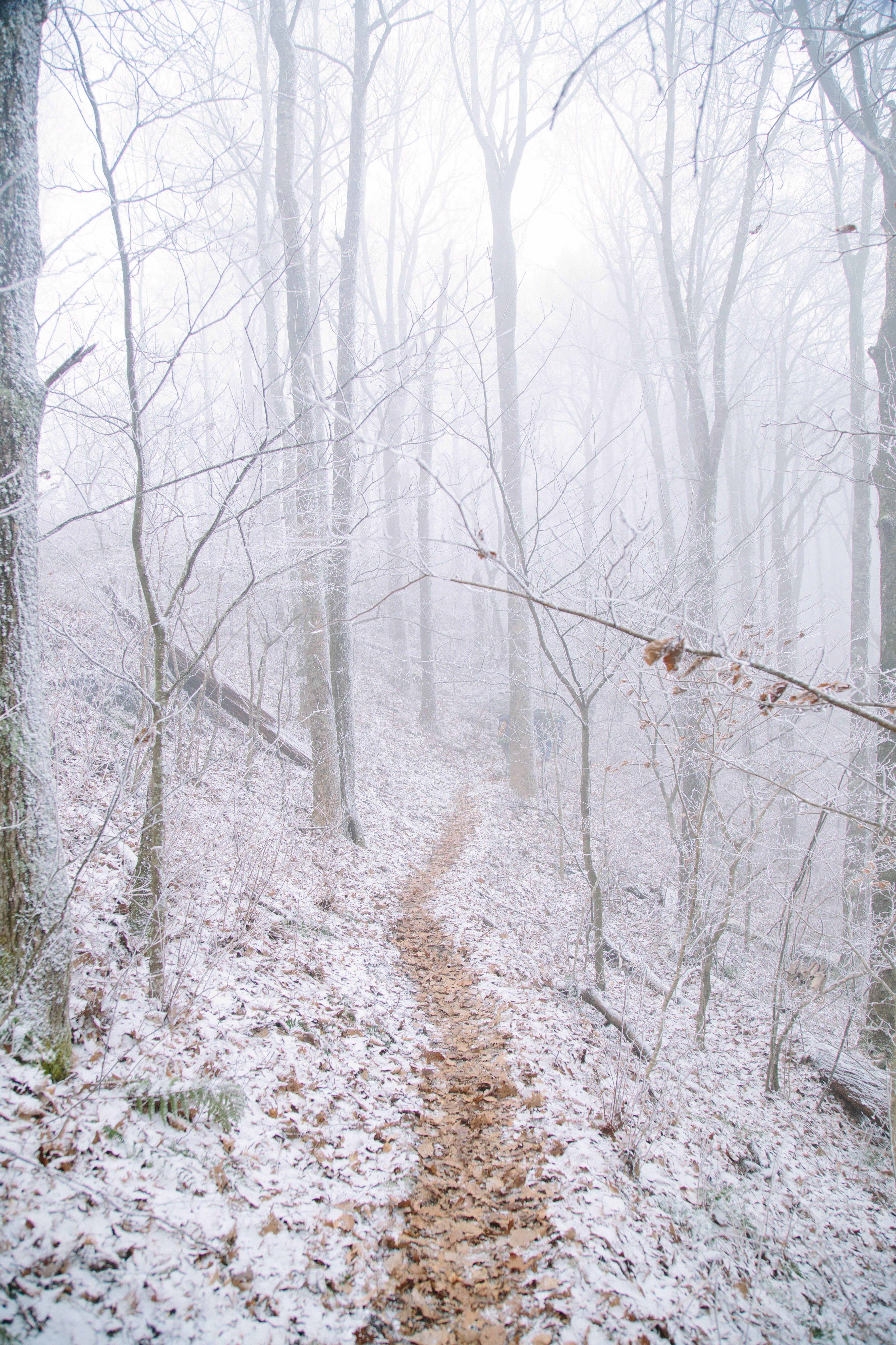 Winter on the appalachian trail oc reddit