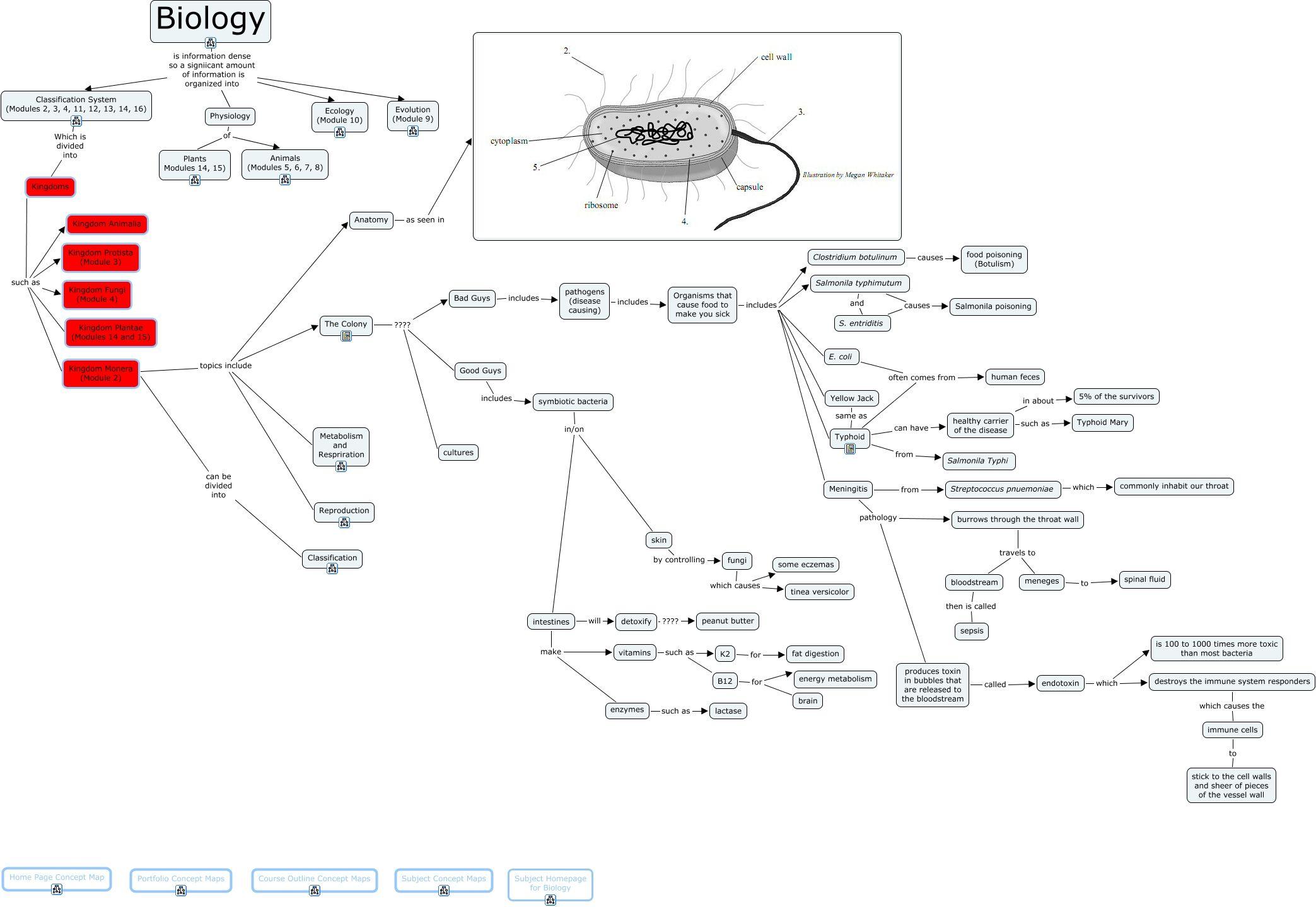 Kingdom Monera Biology Lessons Plant Identification Concept Map [ 1439 x 2087 Pixel ]