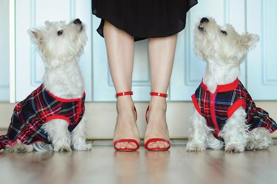 2 tweed dog dresses, Tweed dog dress, Scottish plaid dress