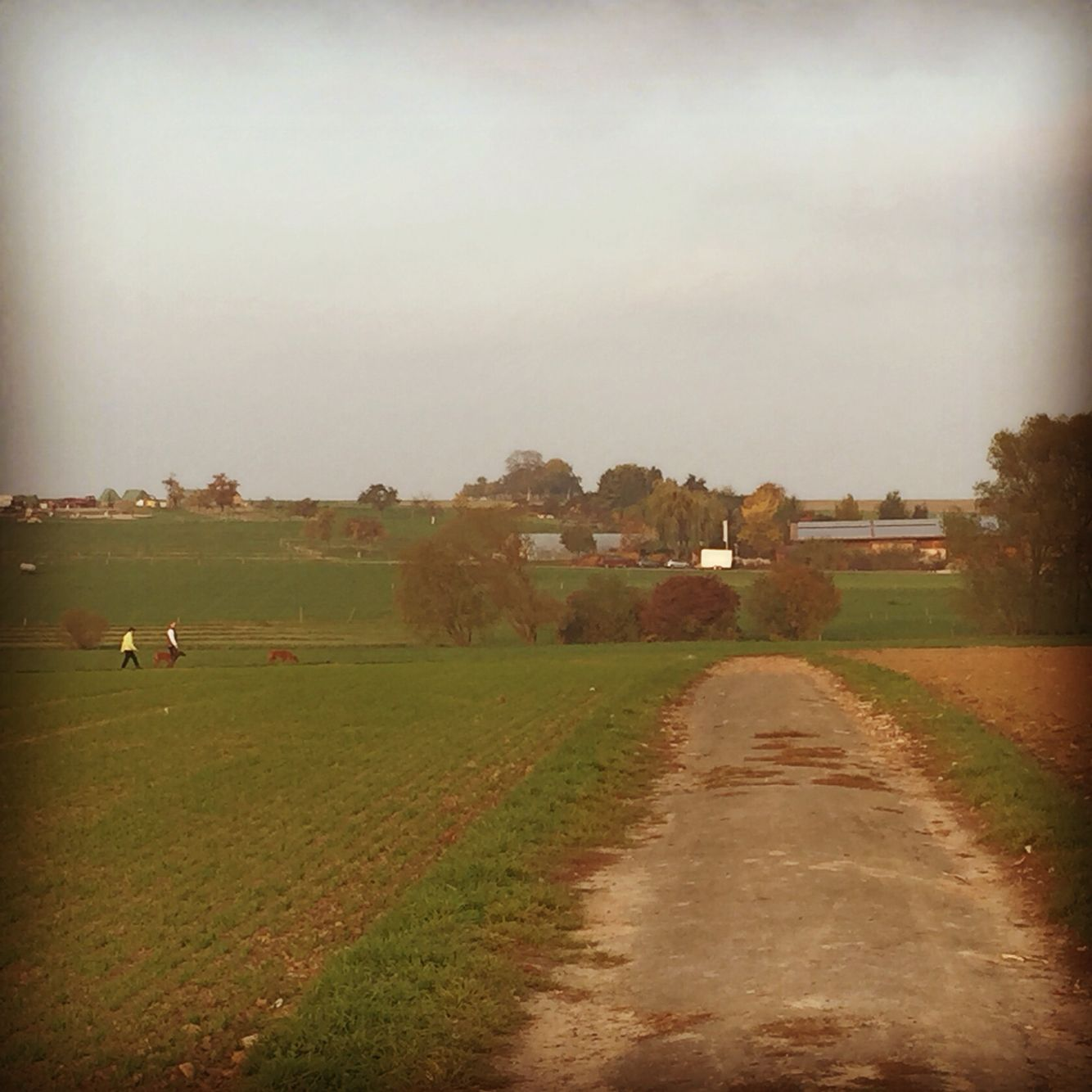 Running trail outside Frankfurt Country roads, Trail