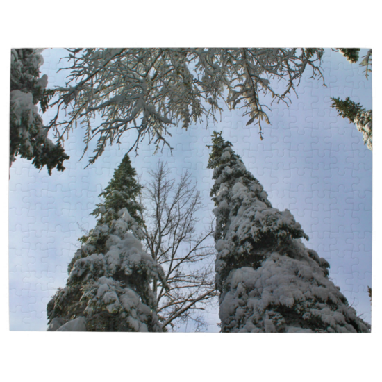 View Up Through Tree Branches In Mid Winter With Snow On