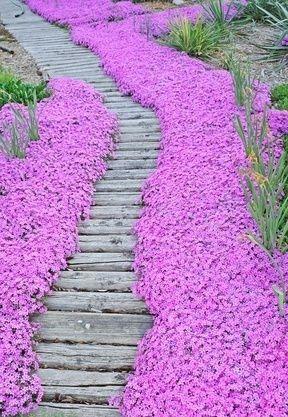 Beautiful Garden #Pathways