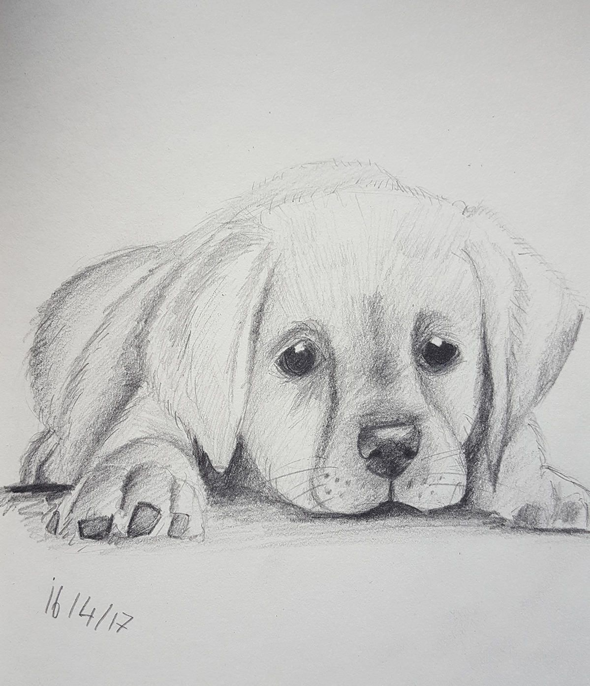 Image Result For Easy Animals Sketches Charcoal Animal Sketches