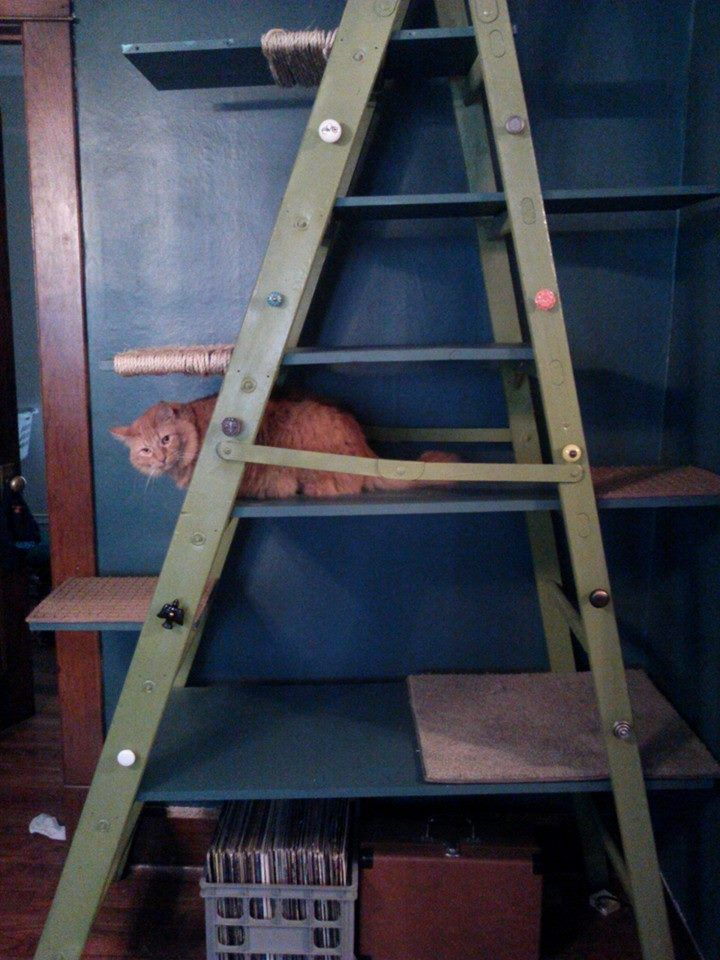 I Made A Cat Tree Out Of A Free Craigslist Ladder Ideally I Want