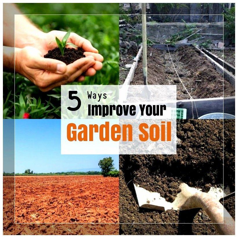 30ab5dd5ade88a21f45deb5c20c75d98 - How To Prepare Soil For Next Year Gardening