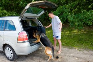 Finding the best car for your dog. http://www.cesarsway.com/dog-travel/Creating-the-Best-Vehicle-for-Your-Dog