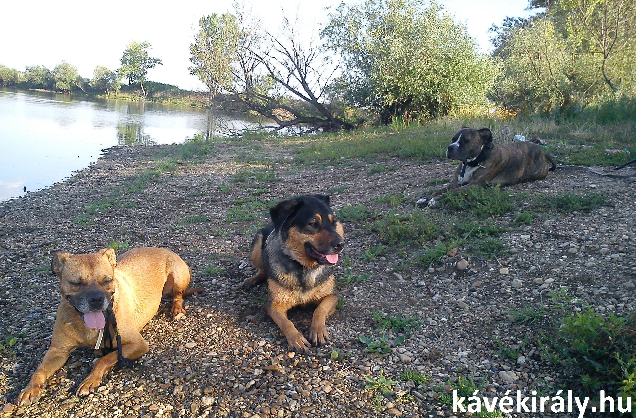 Beki, Bubu és Mézi DXN-es kutyák: naponta kapnak Ganodemát és Spirulinát