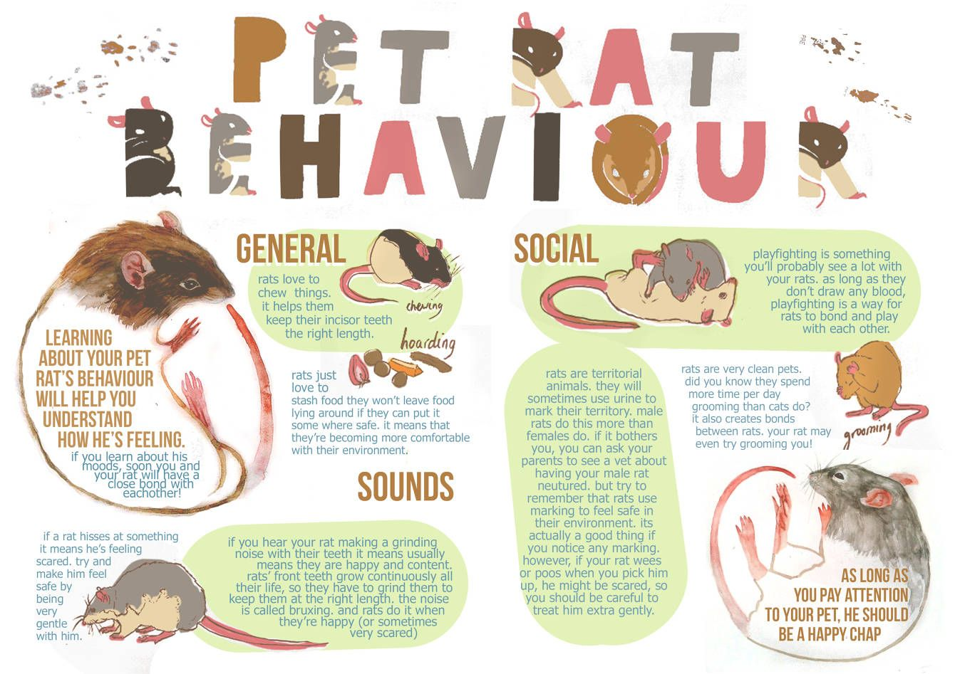 Fancy Rat Information - Laura Smith Illustration | my pets ...