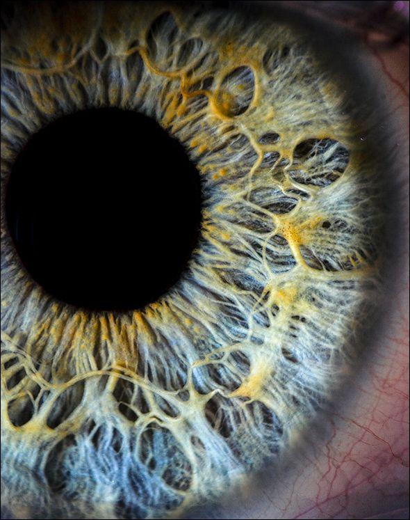 macro photo of an eye.  so crazy.