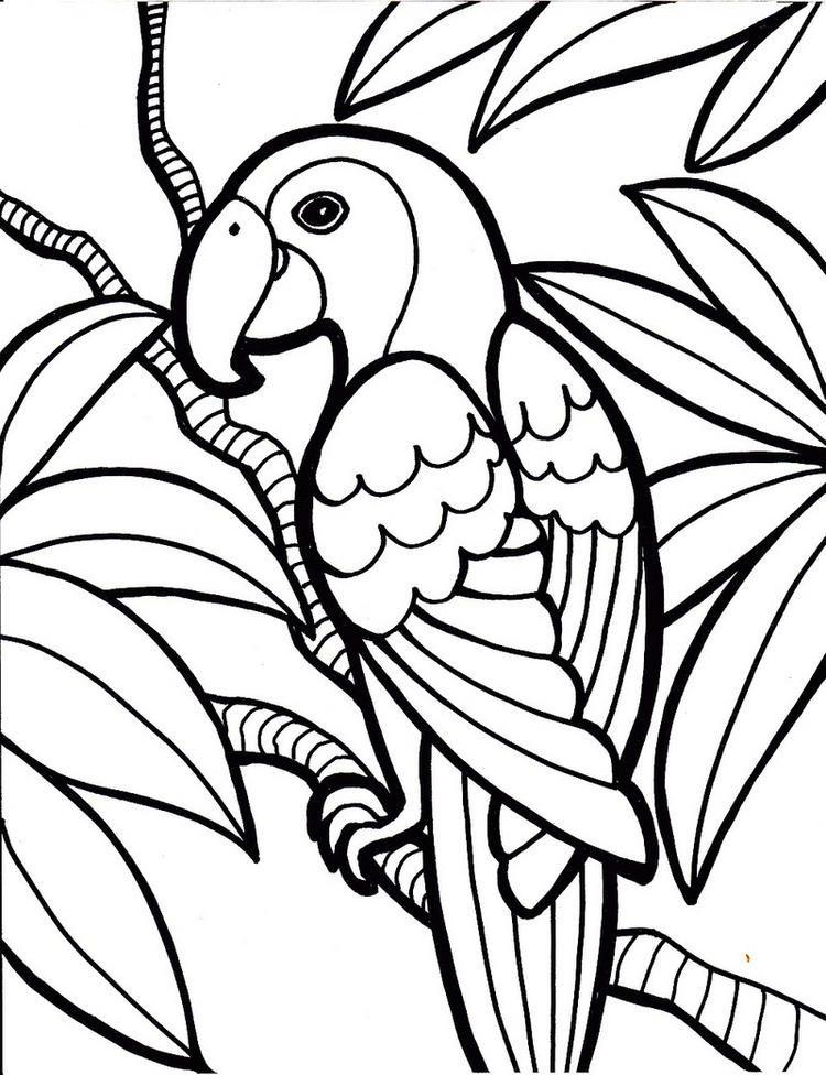 Beautiful Design Of Parrot Coloring Sheet Sketsa Gambar Burung Gambar Hewan