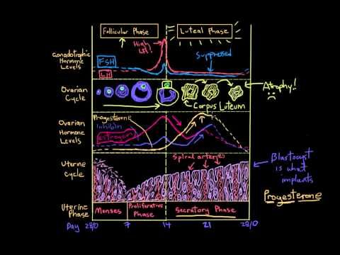 Khan Academy - Reproductive Cycle Graph: Luteal Phase - YouTube