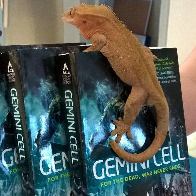 """. @qwillery's Horus on Myke Cole's newest book, GEMINI CELL. #booksonpets #geckoes #books"""