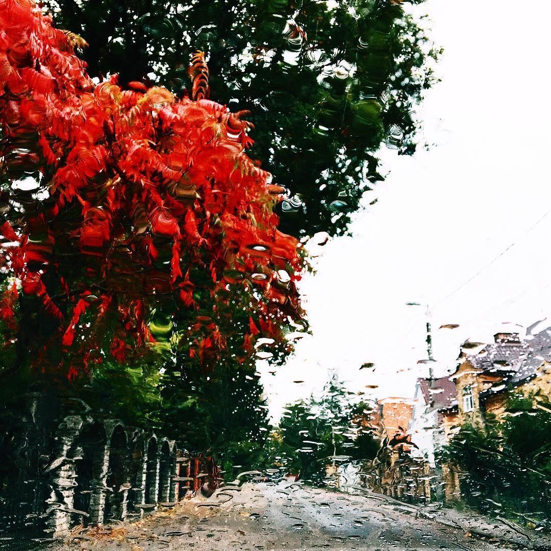 #kaliningrad #autumn #калининград #осень #street #улица